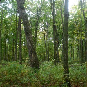 La forêt: nouvel enjeu prioritaire en Montérégie
